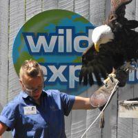 Bird Show Eagle