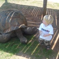 Joshua and the Tortoise