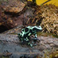 Mackenzie's Favorite Frogs