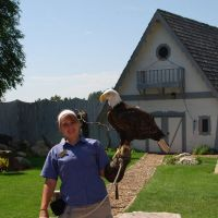 Bald Eagle at Bird show 07/19/2009