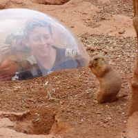 Visit the Prairie Dog Town