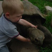 hugging a turtle