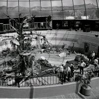 post-fire-1977.jpg