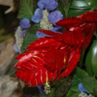 Bromeliad-002