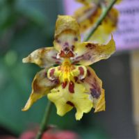 Orchid-001