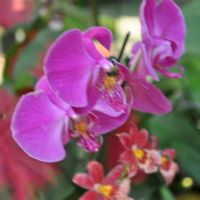 Orchid-014