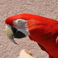 Bird Show - Macaw