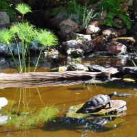 Turtle Pond at Tortuga Falls