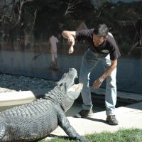 Gator Show
