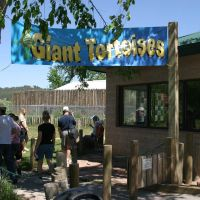 See the Giant Tortoises