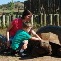 Pet a Giant Tortoise
