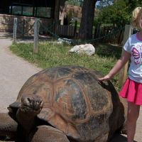Alanna and the Tortoise