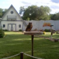 Asian owl in the bird show