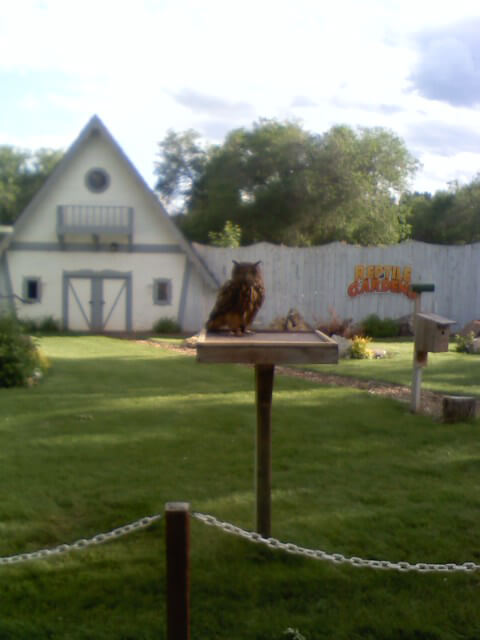 Asian owl in the bird show