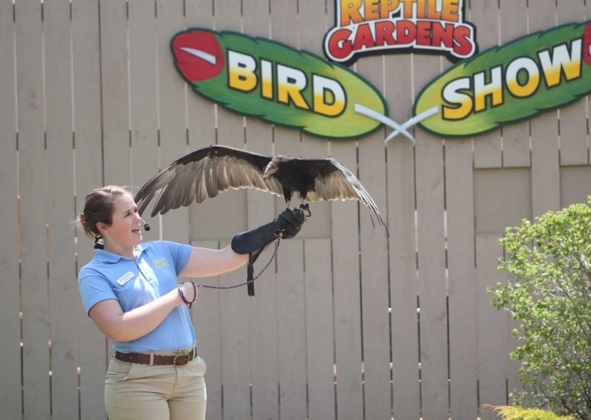 Image of a staff person holding a yellow-headed vulture at the Bird Show