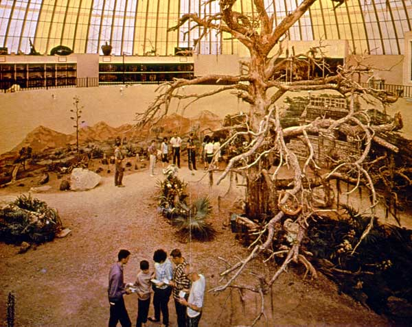 Safari Room in 1965