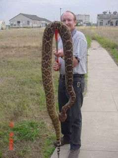 "The infamous ""giant"" rattlesnake"